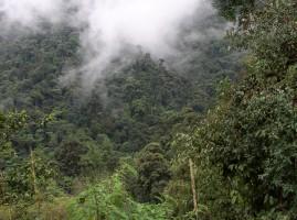 Dinámicas de de/reforestación